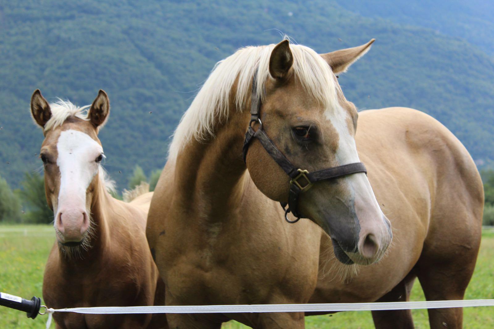 Cosa fare in Valtellina- Equitazione