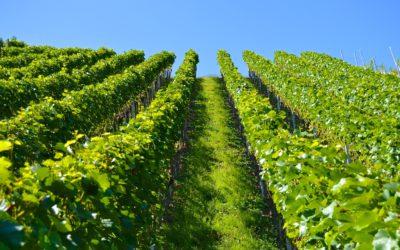 Tirano città del vino